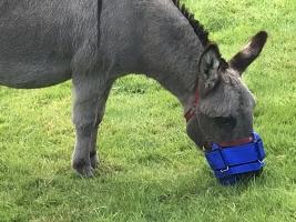 Mini-Donkey-Zephyr